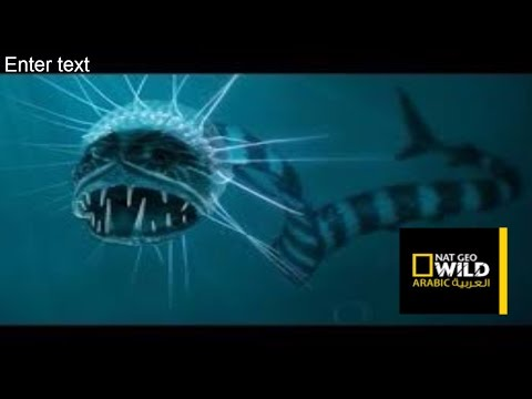 Sea Monsters Octopus Deep Ocean Nat Geo Documentary HD