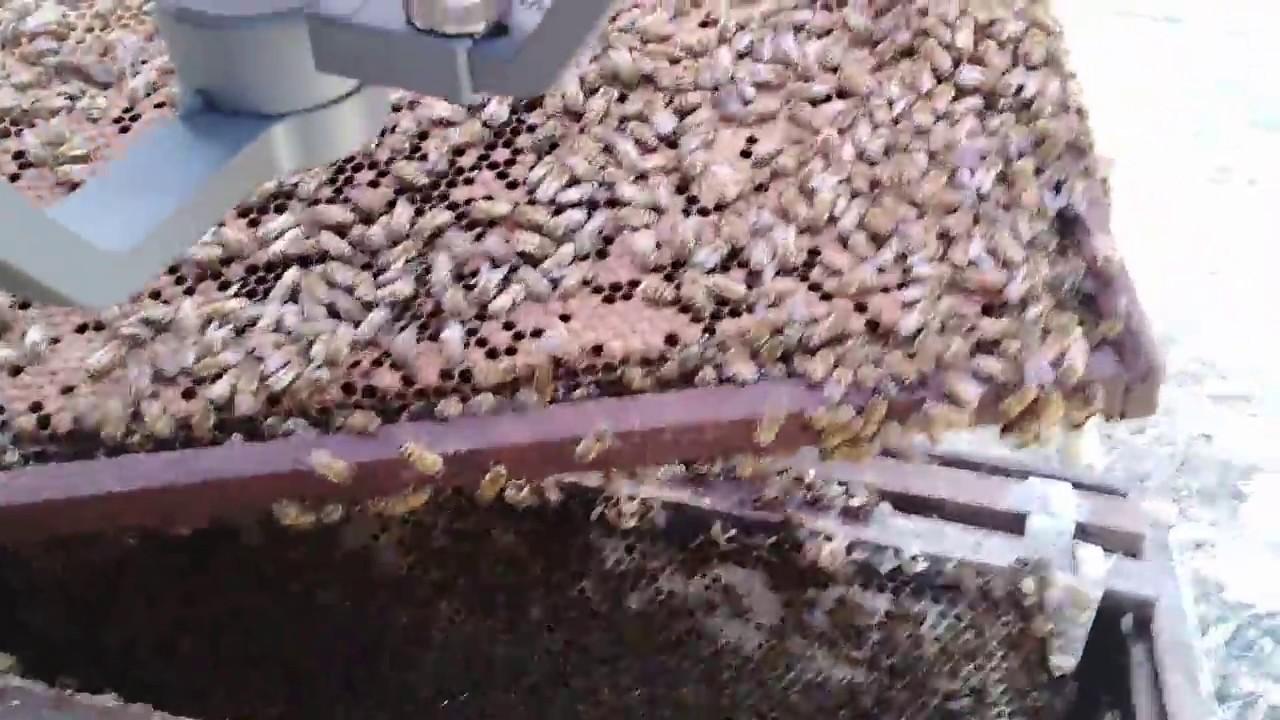 Du lịch Phú Quốc: Khám phá tổ ong và tìm ong chúa