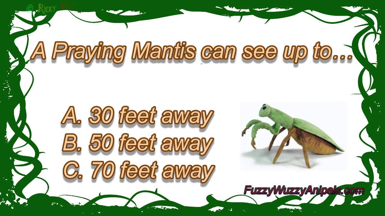 Praying Mantis Animal ...