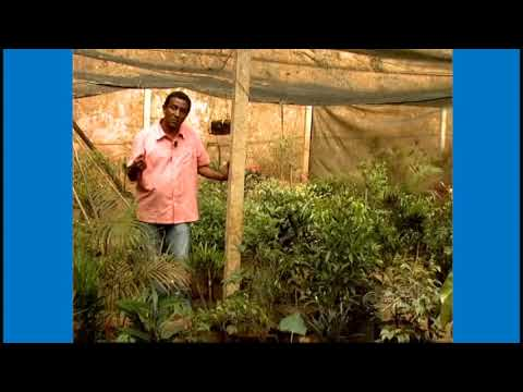 Curso Treinamento de Jardineiro - Técnicas de Plantio - Cursos CPT