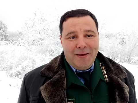 Ставропольские ели и сосны встретят Новый год в лесу