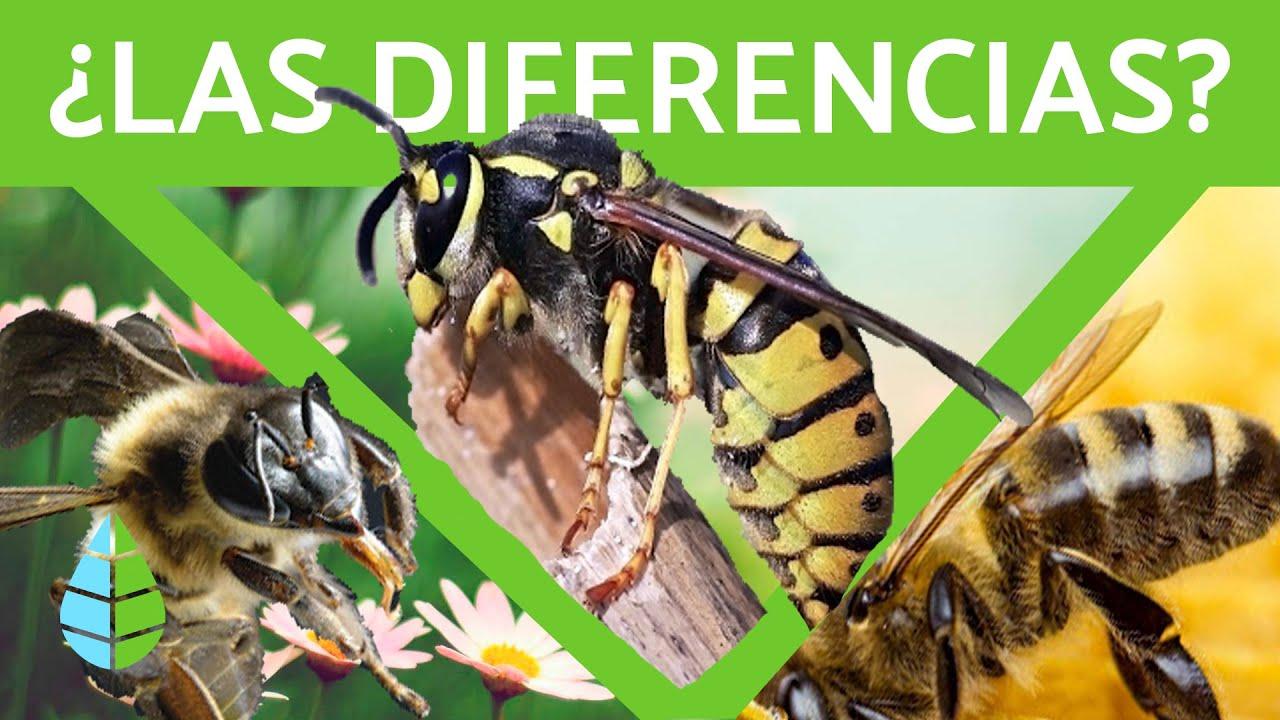 Download Diferencia entre avispa, abeja y abejorro 🐝 (TODA LA INFORMACIÓN)