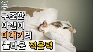 구조한 아기고양이의 놀라운 적응력 / JAPAULBO&FRIENDS