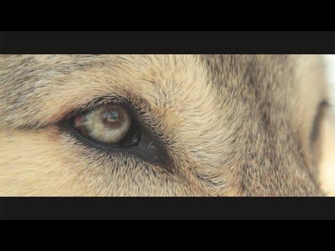 Женя Ремез - Одинокий волк