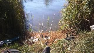 Рыбалка на карася.4 октября 2015.Украина Одесская обл.Fishing