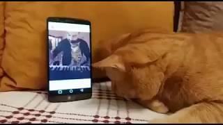 У этого милого слепого кота как-будто есть третий глаз