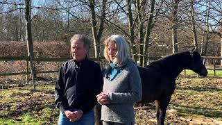 Equine Coaching Ausbildung - Intensivseminar von InsProfil