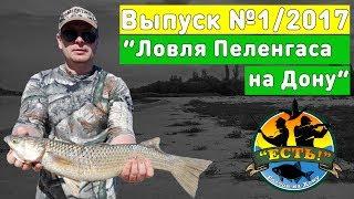 Рыбалка 2017: Ловля пеленгаса на Дону