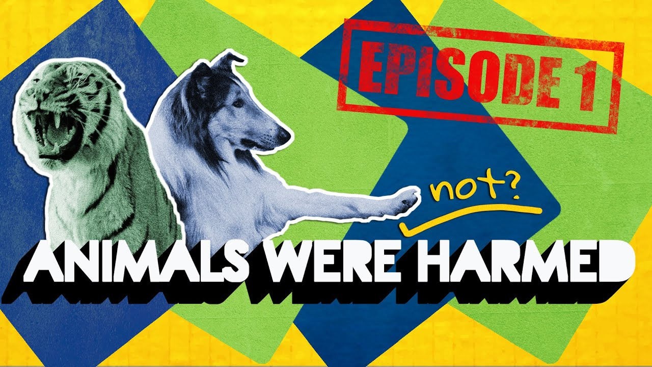 Animals were Harmed in Film and TV | Beyond the Frame