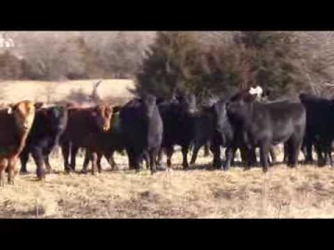 Flying H Missouri Promotional Video