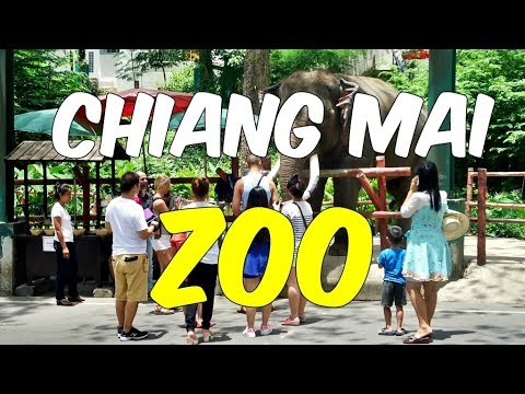 Wonderful Chiang Mai Zoo - You Must Visit This Zoo With Your Kids
