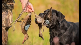 "INSANE TEAL HUNTING!!! ""The Why"" [Glory Days Ep. 30]"