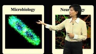 Xiaowei Zhuang (Harvard/HHMI) Part 2: Applications of Super-resolution STORM