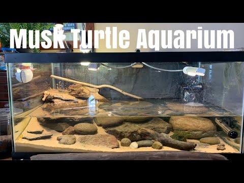 Musk Turtle Community Aquarium