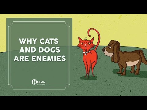 Learn English Listening | English Stories - 56. Why Cats and Dogs Are Enemies