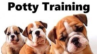 How To Potty Train A Bulldog Puppy - Bulldog House Training Tips - Housebreaking Bulldog Puppies