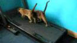 2 funny cats kittens running on the treadmill