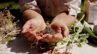 Déjà un engouement pour les semences