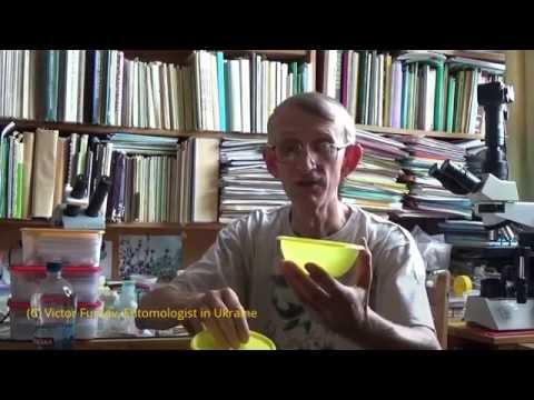 Энтомологу: Какие Использовать Методы Сборов и Хранения Насекомых? (RUSSIAN)