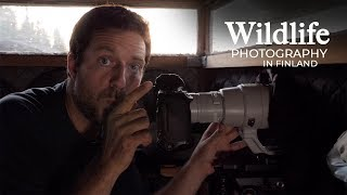 Wildlife Photography - WOLVES and BEARS part 1 | The travel to Finland