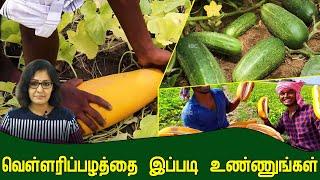 Cucumber   Arokiyamaka Vaala   IBC