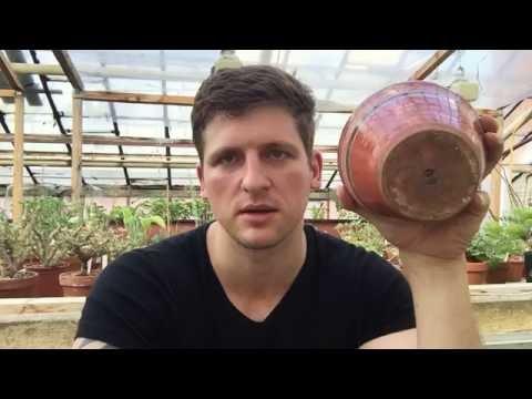 Горшки, кашпо, флорариумы, плошки и другие ёмкости для суккулентов