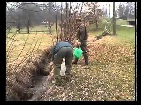 La truite de riviere - Inspection de la pêche du Canton de Berne