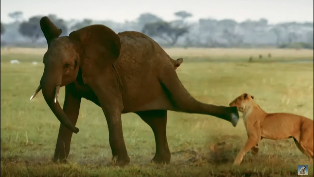 Elephant Mother Baby Saves