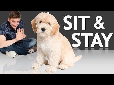 How to Teach your Puppy to Sit and Stay *NEW*