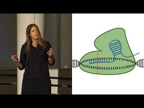 Modifying Mosquitoes with CRISPR - AMNH SciCafe