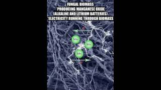 TARGETED INDIVIDUALS - THE MISSING LINK BETWEEN THE FUNGAL INFECTION AND ELECTRONIC HARASSMENT