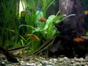 Aquarium,  test-video (HP R727)