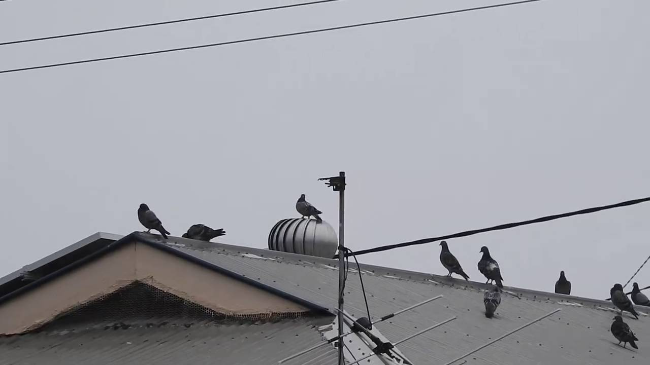 Bird likes to spin on the roof turbine