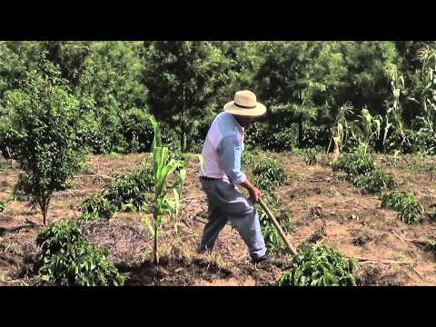 Made In Guatemala: A Day in the Life of a Coffee F