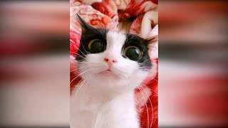 Приколы с животными 2019 23 Смешные видео про котов и собак до слез 2019 видео про кошек 2019