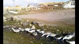 ardahan markaköy kora - bayramoğlu - köy içi