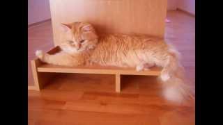 Сибирский котик и мышка)