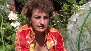 видео Пересадка орхидей
