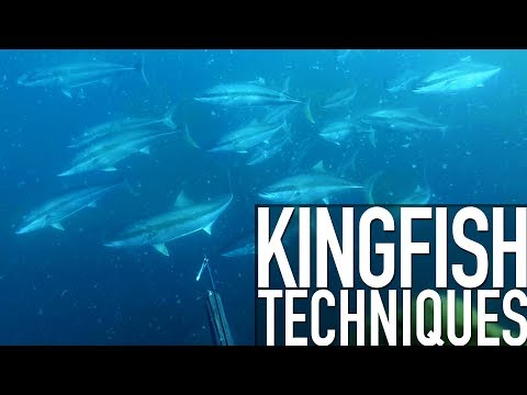 Techniques For Spearfishing Yellowtail Kingfish - Trailer