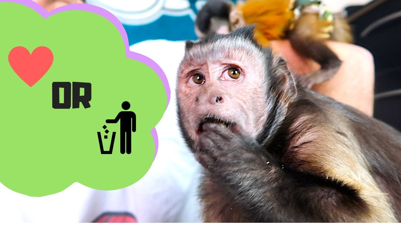 monkey-taste-test-organic-white-bean-puffs