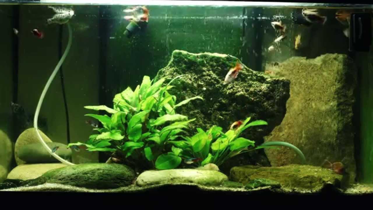 Hd Fish Live Wallpaper For Pc Fond Ecran Vid 233 O Aquarium 1 Heure Youtube