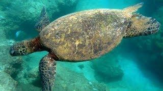 Snorkeling Tunnels Beach | Kauai