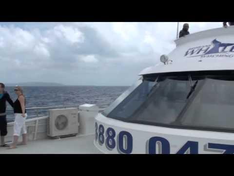 Whalewatching Moreton Bay