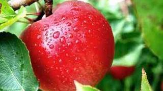 فوائد تناول التفاح على الريق تناول تفّاحةٍ يومياً تمنع الطبيب من زيارتك