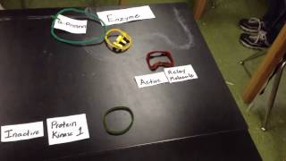 G-Protein-Coupled Receptor Stop Motion Animation