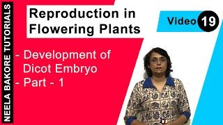 Reproduction in Flowering Plants - Development of Dicot Embryo - Part - 1