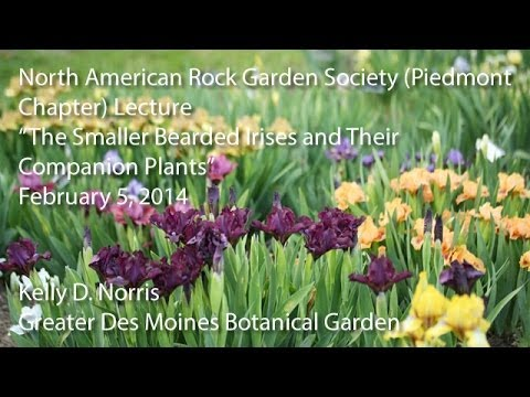 a guide to bearded irises norris kelly