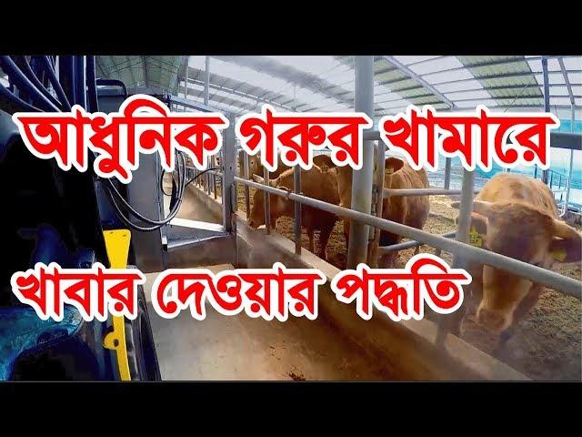 ??????? ???? ?????? ????? ?????? ?????? || Feeding on modern cattle farm