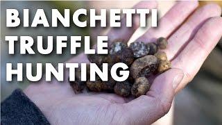 Bianchetti Truffle Hunting Video