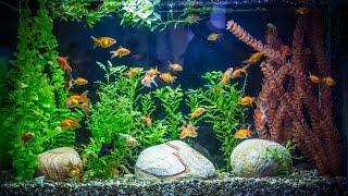 Мой старый аквариум с неприхотливыми аквариумными рыбками и растениями! Аквариумные рыбки!